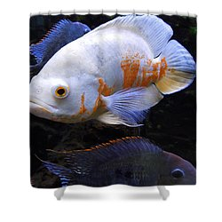 Tropical Fish  Shower Curtain by Colette V Hera  Guggenheim