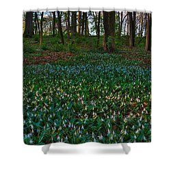 Trout Lilies On Forest Floor Shower Curtain by Steve Gadomski