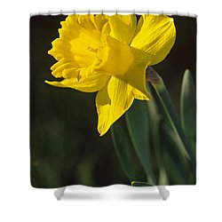 Trumpeting Daffodil Shower Curtain