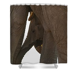 Trunk Touch Shower Curtain