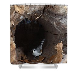 Tufted Titmouse In A Log Shower Curtain