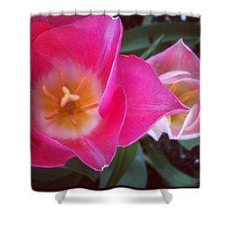Tulip Duo #flowers #tulip #tulips Shower Curtain