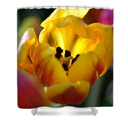 Tulip Light Shower Curtain by Sandi OReilly