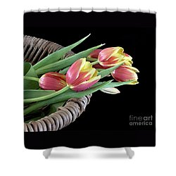 Tulips From The Garden Shower Curtain by Sherry Hallemeier
