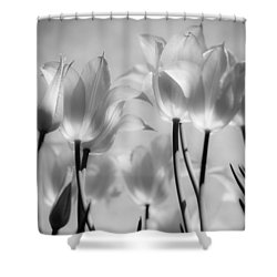 Tulips Glow Shower Curtain by Michelle Joseph-Long