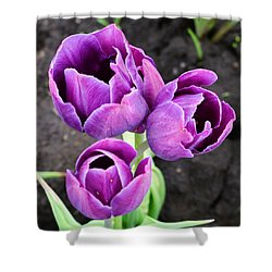 Tulips Queen Of The Night Shower Curtain