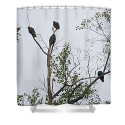 Turkey Vulture - Cathartes Aura Shower Curtain by Mother Nature