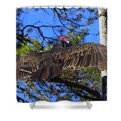 Turkey Vulture With Wings Spread Shower Curtain by Sharon Talson