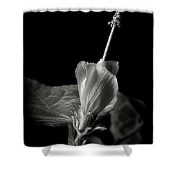 Turk's Cap In Black And White Shower Curtain