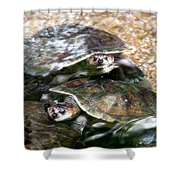 Turtle Two Turtle Love Shower Curtain