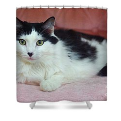 Tuxy In Repose Shower Curtain by Byron Varvarigos