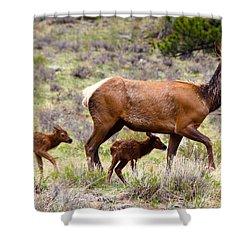 Twin Elk Calves Shower Curtain