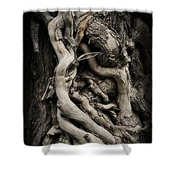 Twisted Dreams Shower Curtain by Mary Machare