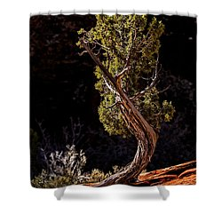 Twisted Reach Shower Curtain by Christopher Holmes