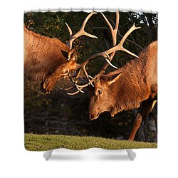 Two Bull Elk Sparring 91 Shower Curtain by James BO  Insogna