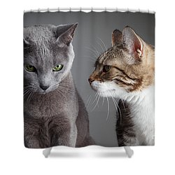 Two Cats Shower Curtain by Nailia Schwarz