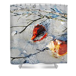 Two Conch Shells With Branch Shower Curtain by Olivia Novak