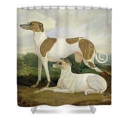 Two Greyhounds In A Landscape Shower Curtain by Charles Hancock