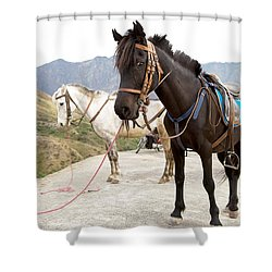 Two Horses Shower Curtain by Yew Kwang