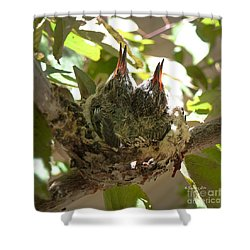 Two Hummingbird Babies In A Nest 3 Shower Curtain by Xueling Zou