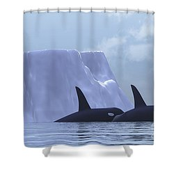 Two Killer Whales Swim Near An Iceberg Shower Curtain by Corey Ford