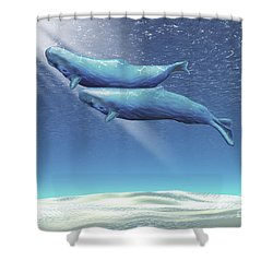 Two Sperm Whales Near The Surface Shower Curtain by Corey Ford