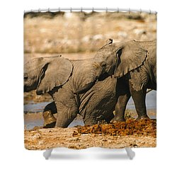 Two Up Shower Curtain
