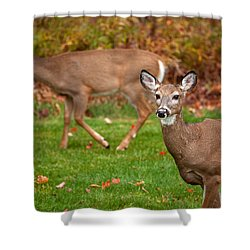 Two Visitors Shower Curtain by Karol Livote