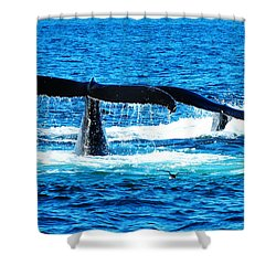 Two Whale Tails Shower Curtain by Paul Ge