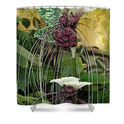 Two White Bat Flowers Shower Curtain by Sabrina L Ryan
