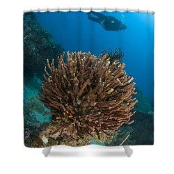 Unidentified Species Of Sponge Shower Curtain by Steve Jones