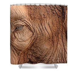 Up Close And Personal Shower Curtain by Mary Mikawoz