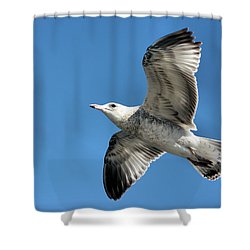 Up Up And Away Shower Curtain by Kristin Elmquist