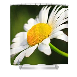 Upturned Daisy Shower Curtain