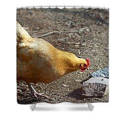 Urban Hen Shower Curtain by Lisa Phillips