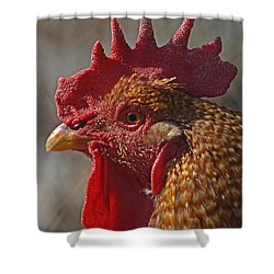 Urban Rooster Shower Curtain