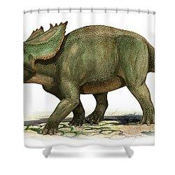 Utahceratops Gettyi, A Prehistoric Era Shower Curtain by Sergey Krasovskiy