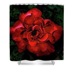 Valentine Rose Shower Curtain by Mariola Bitner