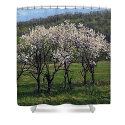 Valley Plum Thicket Shower Curtain by Bruce Morrison