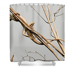 Shower Curtain featuring the photograph Vantage Point by Fotosas Photography