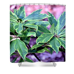 Varigated Verde Shower Curtain by Maria Urso