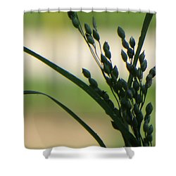 Verdant Grain Shower Curtain by Sonali Gangane
