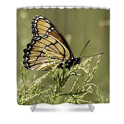 Shower Curtain featuring the photograph Viceroy Butterfly by Betty Depee