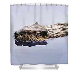 View Of Beaver, Chaudiere-appalaches Shower Curtain by Yves Marcoux