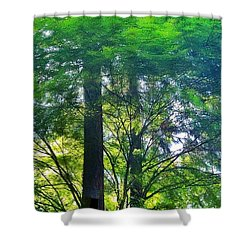 Vine Maple Afternoon Light #trees Shower Curtain by Anna Porter