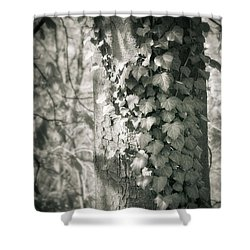 Vine On Tree Shower Curtain by Silvia Ganora