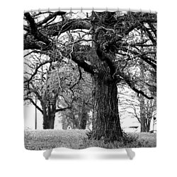 Viney Trees Shower Curtain by Marie Jamieson