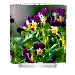 Viola Parade Shower Curtain by Karen Wiles