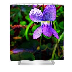 Violet With Dew Shower Curtain by Judi Bagwell