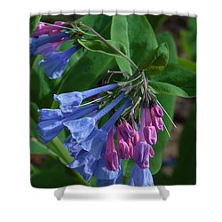 Shower Curtain featuring the photograph Virginia Bluebells by Daniel Reed